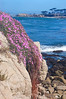 Pacific Grove Ice Plant