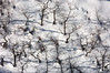 Thicket Snow Pattern