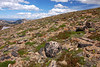 Glorious Alpine Tundra