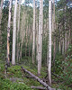 Cycle of Life in the Aspen Grove